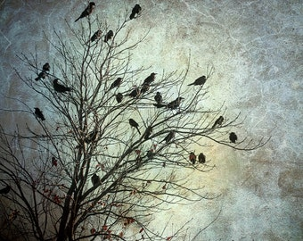 tree photograph landscape photography birds crows ravens dark art home decor