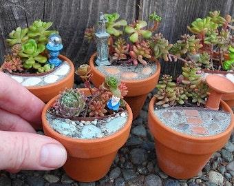 Miniature Garden Terra Cotta Pots for Mini-Mini Gardens, Succulent Gardens, Fairy Gardens, DIY Office Gift, Coworker gift, Thank You Gifts