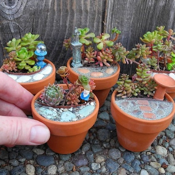 Miniature Garden Diy Kit Makes Two Mini Gardens Everything