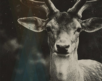 DEER PORTRAIT | photography print