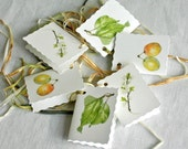 Botanical Gift Tags-Plum,Blossom,Leaf Illustration-Syston white plum prints-watercolour art-gift wrapping labels-labels for weddings-fruit