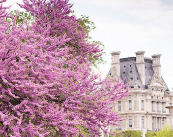 Paris Photograph -  Spring Blossoms in the Tuileries, Large Wall Art, French Home Decor