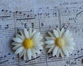 Flower Plugs Gauges Large Creamy White Sunflowers