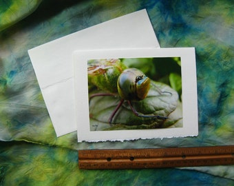 Green Darner DRAGONFLY Note CARD - Amazing Insect Portrait, Insects, Dragonflies, Nature Photo 5 by 7 Cards