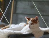 Greys - Curious Cats Window Perch
