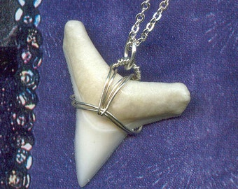 Last One - White SHARK Tooth wire wrapped with Sterling Silver Wire - Tiny Shark Tooth Pendant...Delicate Layering Necklace