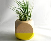 Geometric Air Plant Cube Plant // Yellow