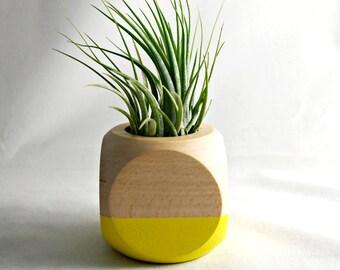 Geometric Air Plant Cube Plant // Yellow