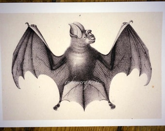 bat by brodtman glorious creepy nature print no. 1