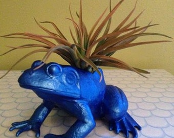 Metallic Blue Sapphire Animal Air Plant Container / Frog Planter / College Dorm Ornament
