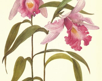 Orchid Print, Plant Print, Botanical Print, Art Print, Home Decor, Book Plate, Botanicals, Wall Decor, Sobralia, Pink, A-27
