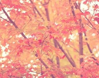 "Red Orange Leaves - Nature Photography - Fall Foliage - Autumn Leaves - ""Crimson Leaves"""