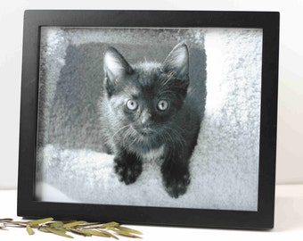 animal charity, kitten photography, black and white photo, 3 sizes available