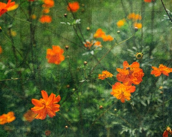 Field of Flowers  Photographic Print - Orange, Spring, green, floral, Romantic, whimsical, shabby, texture, photography, cottage, decor, art