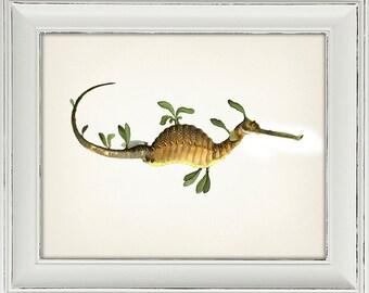 Seadragon - SC-09 - Fine art print of a vintage natural history antique illustration