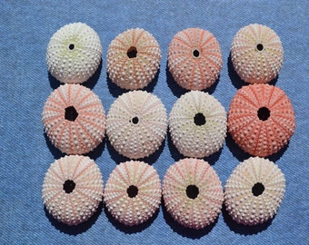 Set of 10 Natural Pink Sea Urchins 1-2 inches