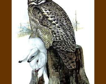 "11x14"" Cotton Canvas Print, Great Horned Owl, Lois Aggassiz Fuertes, 1908, Animals, Birds"