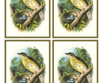Vintage SONG THRUSH with NEST blue Eggs - Framed Image Sheet - Digital Instant Download - nature ephemera collage supply