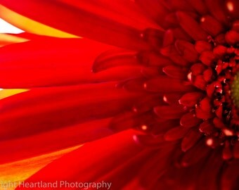Red Daisy Photo, Macro Photography, Nature Photography, Flower Print, Macro Photograph, Red and Yellow, Red Home Decor, Red Wall Art