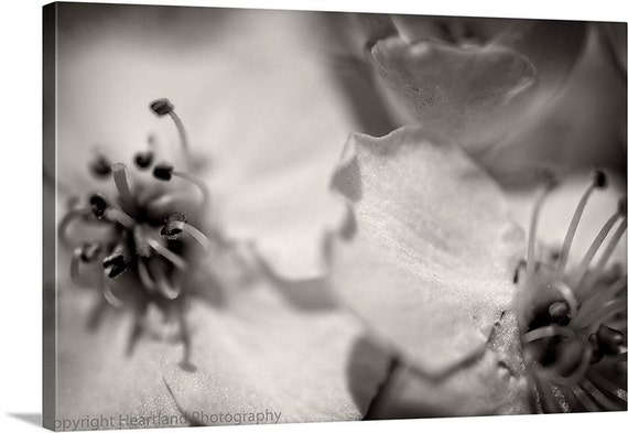 Flower Photo Canvas, Black and White, Macro Photography, Spring Flowers, Ready to Hang, Canvas Wall Art, Modern Photo Canvas, Bedroom Decor