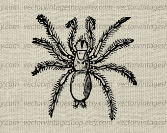 Hairy spider vector graphic instant download, digging spider mygale fodiens clip art, arachnid victorian illustration WEB1699AI