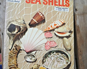 Sea Shells, The How and Why Wonder Book, Donald F Low, Cynthia and Alvin Koehler, Wonder Books, 1961