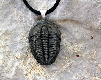 Coldcast Silver  Elrathia Trilobite Pendant Necklace