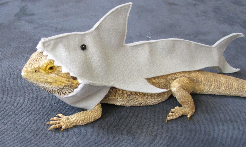 great white shark costume for bearded dragons shown on