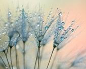 Dandelion wall art, dandelion photography, dandelion print, blue, macro, flower fine art print , nature photo, large wall decor, home decor