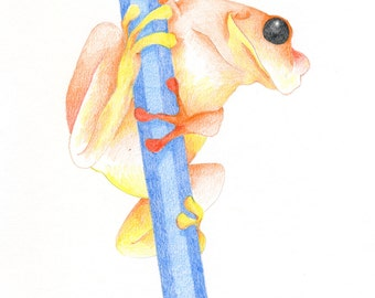 Pencil Frog Orange/Blue