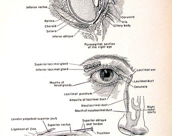 Medical Print - Muscles of the Eye - 1951 Vintage Book Page from Medical Dictionary - 9.5 x 6 Black and White