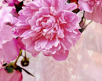 Pink Peony Photography, Dreamy Peonies Hearts Floral Decor, Shabby Chic Pink Peonies Wall Art, Romantic Peonies Floral Art, Peony Photograph