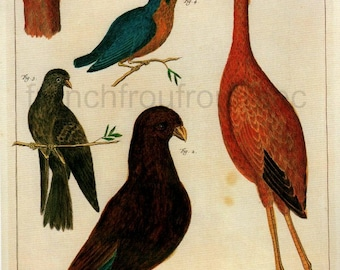 antique pink flamingo pigeon dove kingfisher illustration digital download