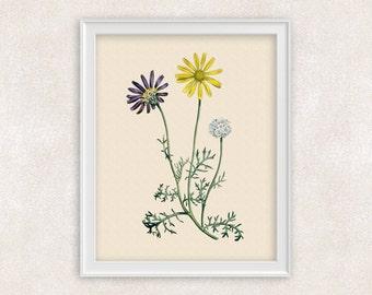 Yellow Chamomile Botanical Art Print - 8x10 PRINT Antique Flower Print - Garden Prints - Illustration - Poster - Victorian Art - Item #149