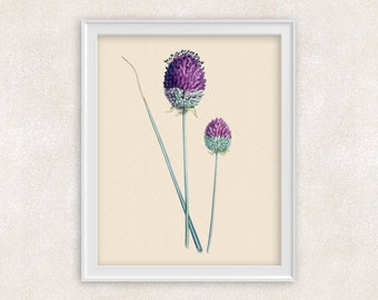 Purple Botanical Art Print - Antique Flower Print - 8x10 PRINT - Garden Prints - Illustration - Poster - Victorian Art - Item #153