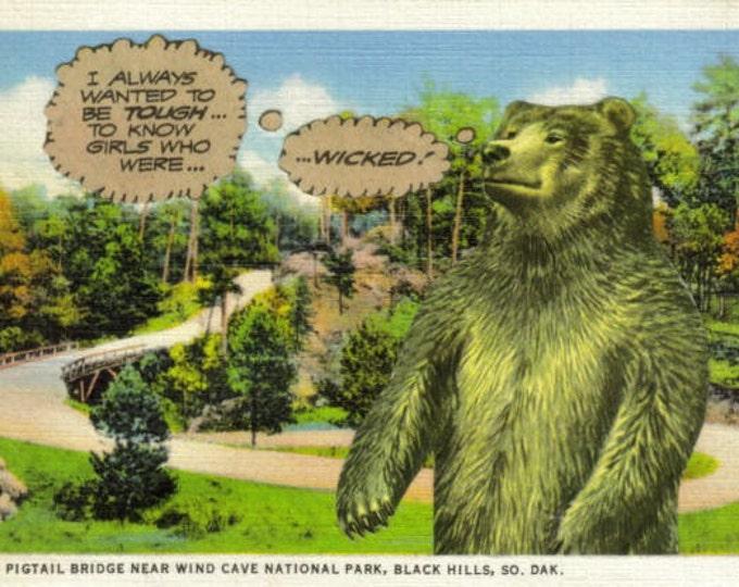 Strange Bear Artwork, Funny Wildlife Art Collage
