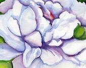 Peony, bud watercolor  painting, original Peony art  5 x 7, Peony art, flowers painting