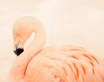 pink flamingo photography, pink nursery decor, animal photography, nature, square minimalist, pink home decor, bird photography