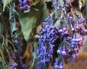 LILAC  naturally DRiED FLOWER Bunches
