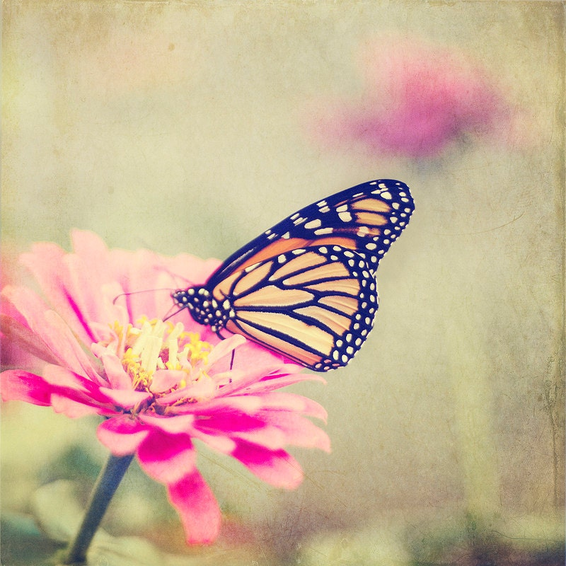 Monarch Butterfly Pink Flower 8x8 photo