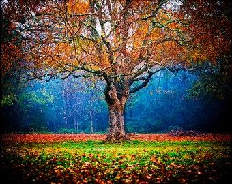 Colorful Landscape, Autumn Foliage, Fall Photography, Fog, Tree Decor, Nature Print, Blue, Green, Orange