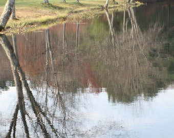 Reflection of trees in the pond stock photo image free use