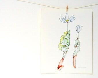 Flower Print - Bloodroot  - 1989 Vintage Page 10 x 8