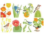 Box of 8 Bird and Garden greeting cards