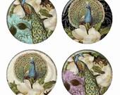 Elegant Peacocks Magnets or Pinback Buttons or Flatback Medallions Set of 4