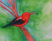 I'iwi Bird Hawaiian Honeycreeper Original Wildlife Painting by Nina Bolen OOAK Artwork SALE!