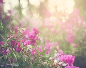 Wild Sweet Peas, Flower Photography - pastel pink, green, purple home decor print