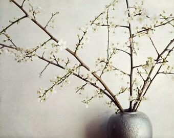 "Flower still life white plum blossoms zen style silver gray kitchen dining room decor spring wall art ""Zen Bouquet"""
