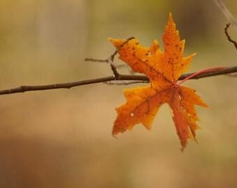 Autumn decor, maple leaf, harvest gold, fall forest, nature photo, pumpkin orange, fall colors, honey gold, burnt orange, minimalist, trees