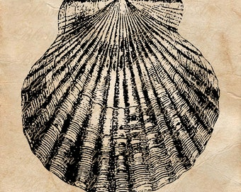 download mycorrhiza manual